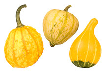 Yellow Gourds