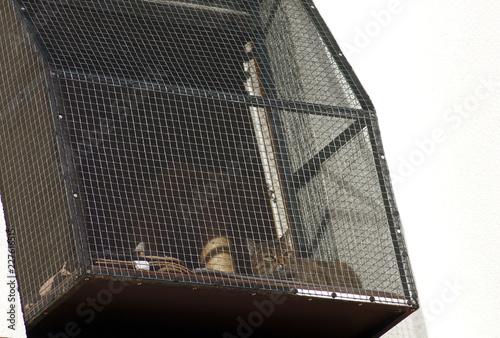 Fotografie, Obraz  Katze sonnt sich auf Katzen Balkon