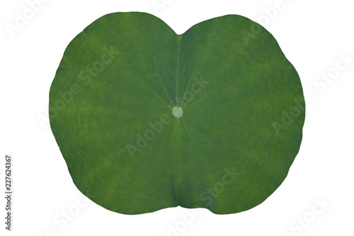 Canvas-taulu Top of lotus or lily green leaves isolated on white background.