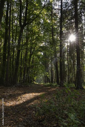 sciezka-w-lesie-ze-sloncem-lsniacym-przez-drzewa