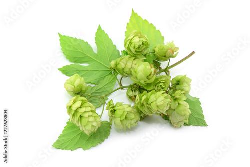Tuinposter Bier / Cider Hopfen
