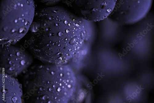 Valokuva Close up, berries of dark bunch of grape with water drops in low light isolated