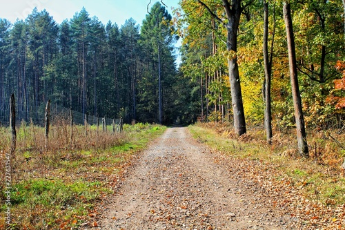 Spoed Foto op Canvas Weg in bos Las