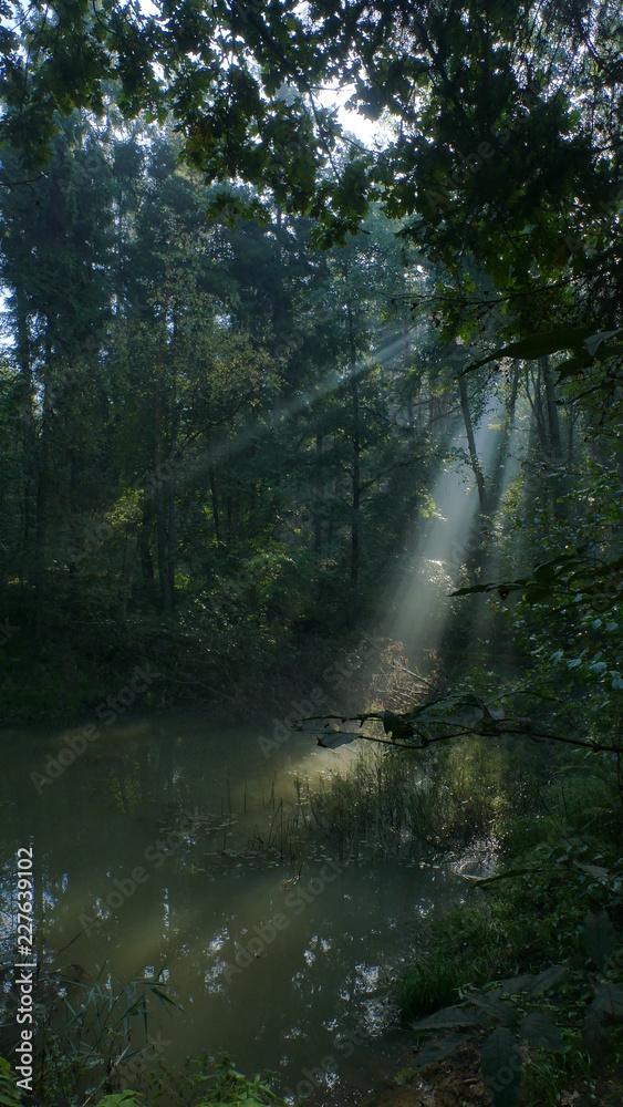 Fototapety, obrazy: Światło w magicznym miejscu. Wczesny poranek w parku krajobrazowym Segiet (UNESCO). Polska