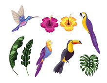 Set Exotic Birds With Natural Leaves