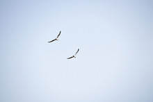 Two Sea Gulls Flying Hovering ...