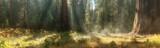 Fototapeta Las - Morning in Sequoia National Park, USA