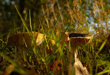 Two Mushrooms In The Forest
