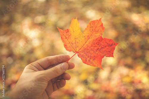 a man holds a maple leaf in his hand against the foliage