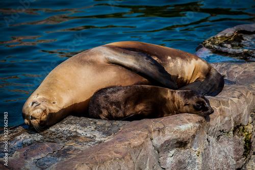 Foto op Plexiglas Noordzee Robbe