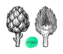 Ink Sketch Of Artichokes.