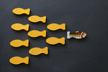 Different Fish Swimming Opposi...