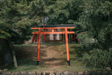 Pathway Torii Gates With Green...