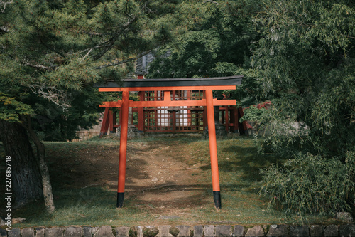 Pathway torii gates with green leaves background
