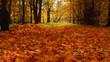 Golden autumn maple leaves in autumn nature park beautiful landscape october