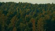 An aerial footage of coastal pine forest you can see layers of green pine trees at Swedish archipelago coast, Filmed in 4k UHD with a telephoto zoom lens.