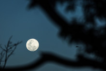 Full Moon Between Branches Wit...