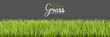 Summer background. Green grass borders. Texture High green fresh grass isolated on transparent background. Vector illustration nature background.