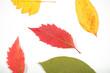 листья осенние лежат на столе фоновое изображение