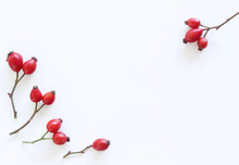 Rose Hip Berries Isolated On White Background. Flat Lay Pattern. Top View.