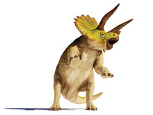 Triceratops Horridus Dinosaur In Action (3d Illustration Isolated With Shadow On White Background)