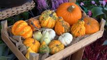 Halloween Zucche Decorative Arancioni Gialle E Arancione  In Cesta