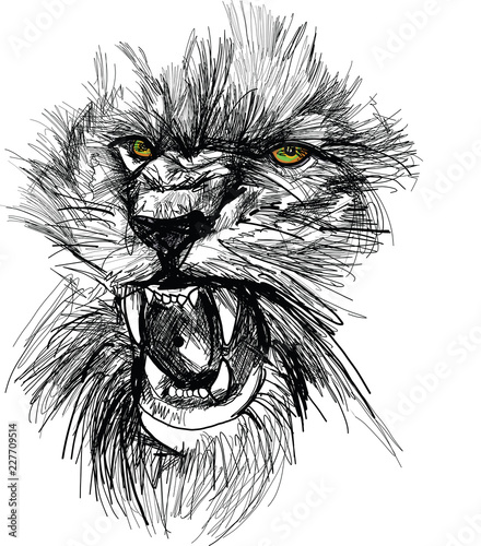 Recess Fitting Hand drawn Sketch of animals Sketch of lion head