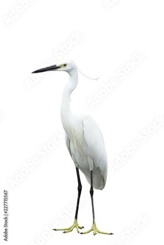 Egret isolated on white background Wallpaper Mural