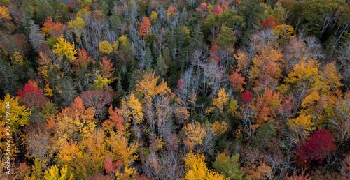 Valokuva  Autumn Fall Foliage Colors Drone Photo