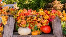 Display Of Pumpkins For Harvest Season