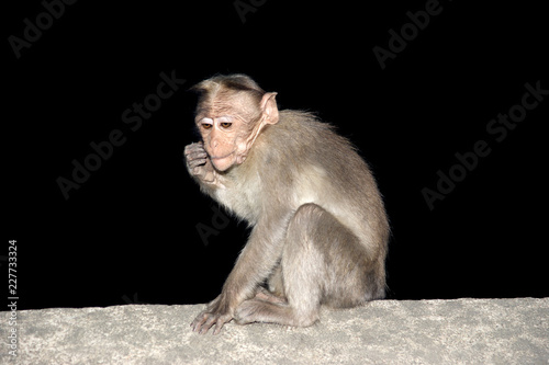 Tuinposter Aap monkey (macaque) isolation on a black background