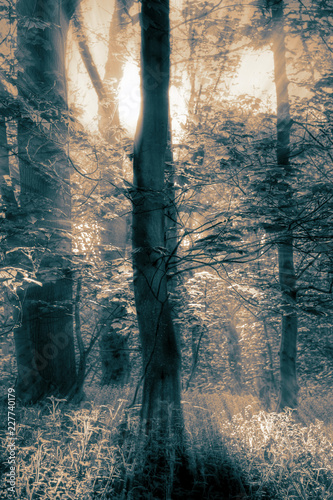 Sunlight shining through trees on an early misty morning with toning