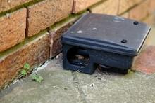 A Black Plastic Rat Trap (bait...