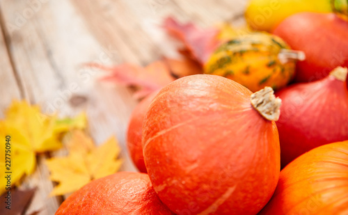 Fototapety, obrazy: Close-up of pumpkins and autumn leaves background. Selective focus, shallow DOF.