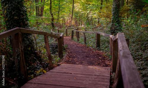 Foto op Canvas Weg in bos camino en el bosque de madera