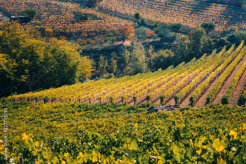 Langhe, Piedmont, Italy. Autumn landscape with vineyards and hills