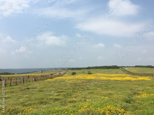 Poster Blauwe hemel landscape with yellow field and blue sky