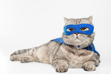 Superhero, Scotch Whiskey With A Blue Cloak And Mask. The Concept Of A Superhero, Super Cat, Leader. On A White Background.Macho, Isolate