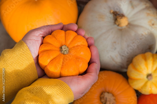 Fotografie, Obraz  A pair of human hands holding a small pumpkin called a Munchkin over other Winter Squash and gourds