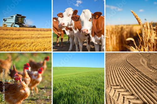 Agriculture et paysage de France