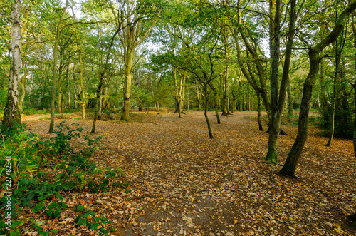 Photo  Mousehold Heath 8