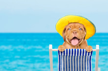 Happy Puppy Resting On A Deck Chair In The Beach. Space For Text
