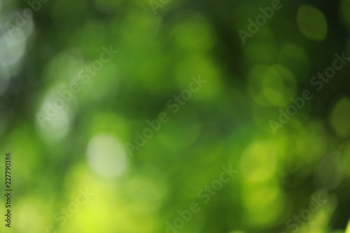 Fotografia  blurry green with bokeh nature background