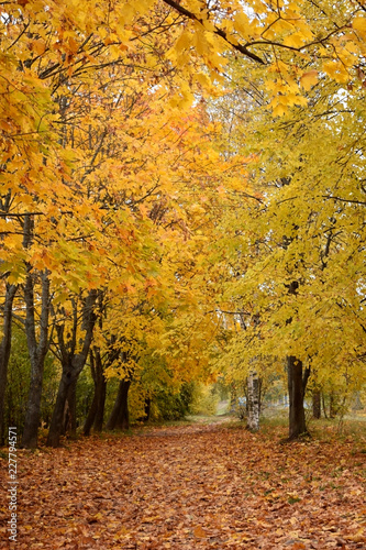 Foto op Canvas Herfst Autumn park with yellow trees along the path covered with fallen leaves