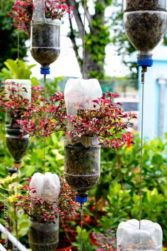 Adobe Stock & recycle plastic bottles as flower pots - Buy this stock photo and ...