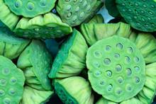 Fresh Lotus Seed Pods