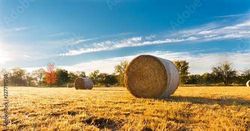 Obraz na plátně Hay bale in a farm field
