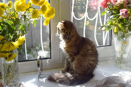 Fototapety, obrazy: cat sitting on a window sill and looking outside