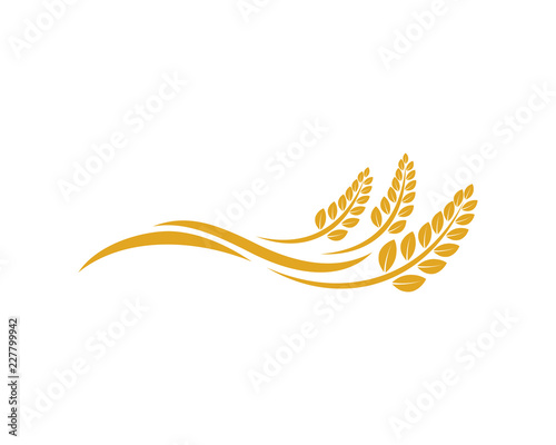 Fototapeta Vector Growing Plant Agriculture wheat Grain Sign Symbol Icon Logo Template Design Inspiration obraz