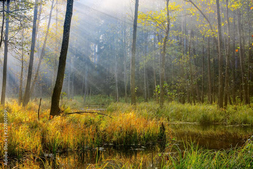 Fototapeta jesień na Mazurach